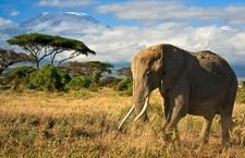 Kilimanjaro Backdrop
