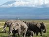 Kilimanjaro NP Elephants - Tanzania
