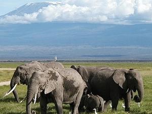 Parque Nacional del Kilimanjaro