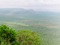 Krishna Wild Life Sanctuary, Avanigadda