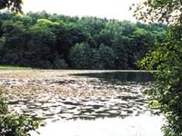Kuźnik Nature Sanctuary