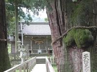 Great Sugi Of Kayano