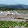 Lake Chamo - Arba Minch - Ethiopia.