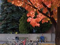 Universidad de Lakehead