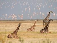 3 Days Safaris Lake Manyara, Ngorongoro & Tarangire