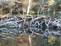 Landscape Park Of Solska Primeval Forest