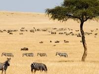 Maasai Mara Game Reserve
