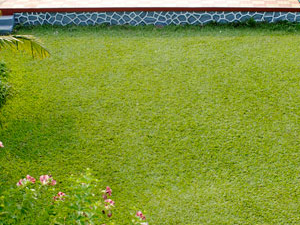 Lawn With Pool View