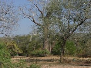 Lengwe Parque Nacional