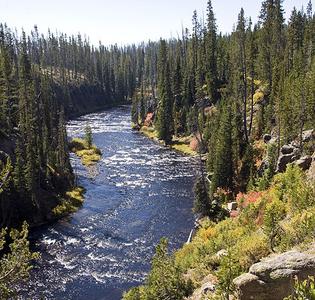 Lewis River Wyoming