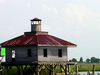 Lighthouse Near Rigolets