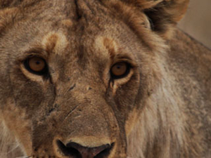 Etosha, Caprivi, Chobe and Victoria Falls Safari Fotos