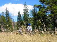 Logging Lake Trail