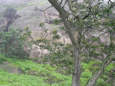Lomas De Lachay - Lima