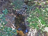 Los Trancos Creek