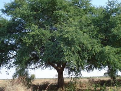 Site Of Dooroy - Boda-ngal