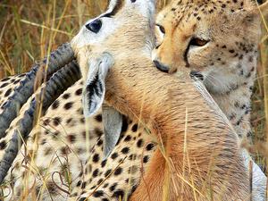 7 Days Masai Mara, Nakuru and Amboseli Package Photos