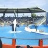 The Killer Whale Show At The Seaquarium