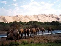 Gurvansaikhan Parque Nacional Gobi