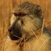 Monkey From Tsavo East
