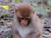 Sajnekhali Wildlife Sanctuary