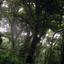 Monteverde Forest