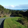 Mount Victoria Park Views - Wellington NZ