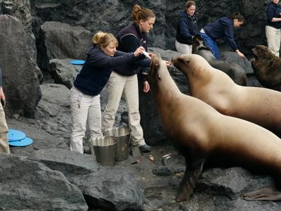 Staff Feeding Pinnipeds At The Aquarium