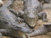 Madras Crocodile Bank Trust