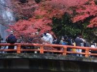 Meiji no Mori Minō Quasi-National Park