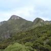 Mount Hobson Great Barrier Island