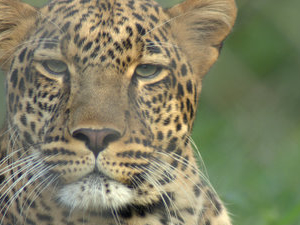 Nairobi Animal Orfanato
