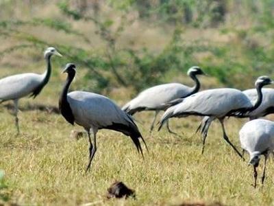 Nandur Madhmeshwar Bird Sanctuary 3
