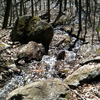 Naugatuck State Forest
