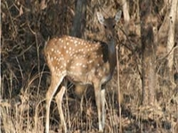 Nauradehi Wildlife Sanctuary