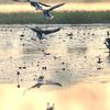 Navegaon Bird Sanctuary