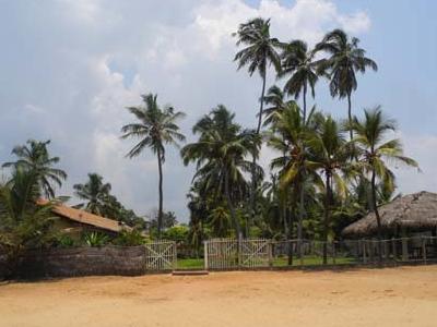 Negombo Beach And Palms
