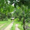 Niokolo-Koba Forest Area - Velingara