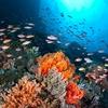 Off North Sulawesi