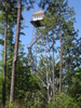 Open Pond Fire Tower