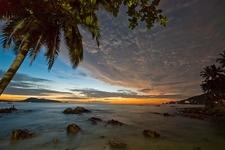 Palm Tree At Dawn Patong Beach