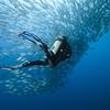 Panglao Diving