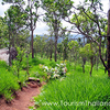 Laen Phu Kha Parque Nacional