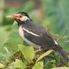 Patna Bird Sanctuary