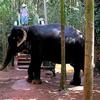 Ponda Resident Elephant