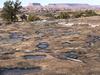 Pothole Point Trail - Canyonlands - Utah - USA