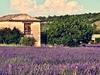 Provence - Lavender Farm