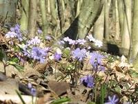 Przełom Hołubli Nature Reserve