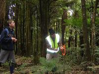 Pureora Forest Park