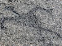 Puu Loa Petroglyphs Trail